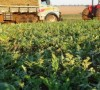 Agricultura familiar movimenta R$ 224 milhões na economia do Estado