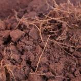 "Embrapa mostra ""ao vivo"" benefícios do sistema radicular para o solo e sistema de diagnóstico rápido da qualidade do solo"