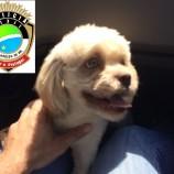 Polícia Civil recupera cachorro furtado avaliado em mais de R$ 1.000,00